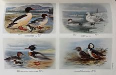 H. F. Witherby [et al] - The Handbook of British Birds - 5 Volumes - 1947/8
