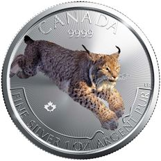 Canada – 5 Dollars 2017 'Predator Lynx' in colour – 1 oz silver