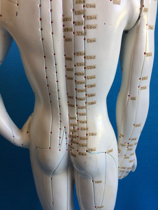 Hefty male acupuncture model - Catawiki
