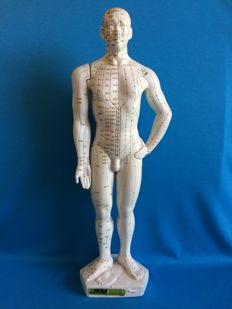Hefty male acupuncture model