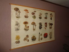 "Beautiful old school poster / school map on linen ""Mushrooms.""   Images of 18 mushrooms found in The Netherlands, like the Ramaria Formosa and the Porcini mushrooms."