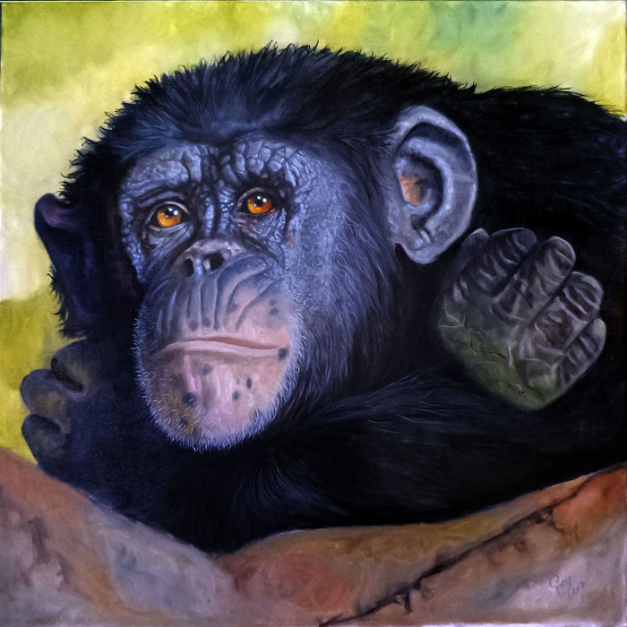 Gary Wakeham - A chimps Look