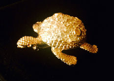 Givenchy - Turtle Brooch Pin