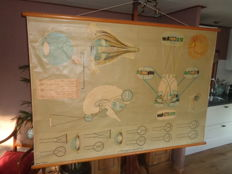 "Big old Anatomical school poster / school board of the ""eye and its functions"""