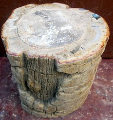Trunk of Petrified Wood - 12,4 kilos - 19 x 16 x 20 cm
