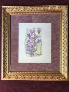 Set of 6 Orchideaceous Flowers - 1867