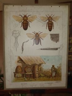 "More than a hundred years old school poster ""The bees, Les A Beilles"" and the Ant, La fourmi by H.J. Van Lummel"