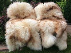 Pair of brown-tipped and long-haired sheepskins - Ovis aries - 130 cm (2)