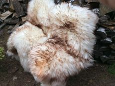 Extra large pair of brown-tipped natural sheepskins - Ovis aries - 130 cm (2)