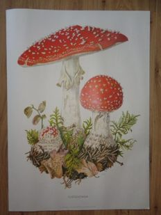 "Four old school posters/charts, Cramer's  organic wall posters with Mushrooms ""Fly Agaric, Satan's bonnet, Parasol Mushroom, Pearl-Amanita"""