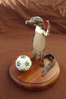 Curious taxidermy - Nile Crocodile playing the Football Referee's Red Card - Crocodylus niloticus - 14cm