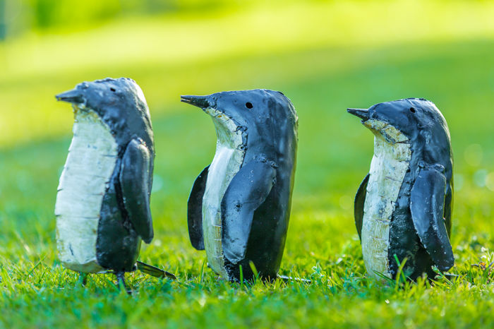 Three pretty penguins