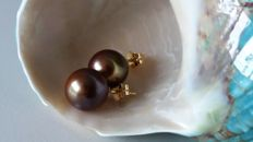Tahitian pearls with natural colours, 13-14 mm