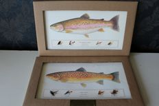 Trout fishing - Magnificent images of the rainbow trout and brown trout with 4 fly fish-baits (fishing flies) each (handmade) on card (map)