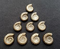 Set of 10 Golden Pyrite Ammonites from UK - 18–25 mm