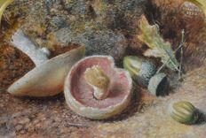 Charles Edward Wright (1830-1905) - Still life of mushrooms and acorns