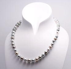 Round Tahitian Pearl Necklace  8.2x10.2mm in a beautiful rainbow of colours with Gold Clasp