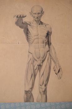 Unknown - original anatomy drawing in charcoal - early 20th century