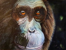 Gary Wakeham - Chimp Watching
