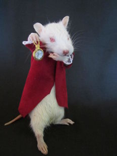 Curiouser and curiouser - the Rat with his Fob Watch - Rattus sp - 16cm