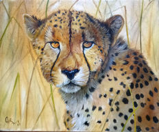 Gary Wakeham - Male Cheetah