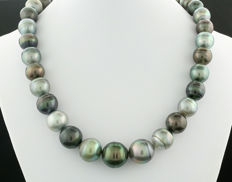 Multi colour Tahitian pearl necklace (string) 11.0 to 14.5 mm, fine lustre and glittering overtones --- no reserve price ---