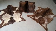 Taxidermy - a collection of fine Goat skins - Capra aegagrus hircus - 80 x 105cm  (3)