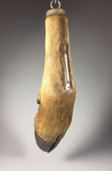 Leg of a moose with thermometer