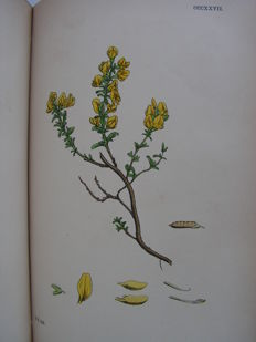 John T.  Boswell Syme. -  English botany or coloured figures of British plants. Volume III -  1864