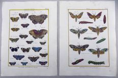2 x Pierre André Latreille (1762 - 1833) - Butterflies and Moths - 1790