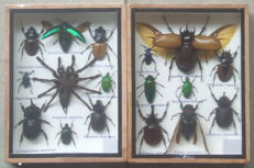 Nice Entomology collection boxes - 20 x 15cm  (2)