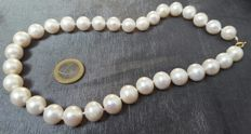 Gold (18 kt) - Necklace of large (14 to 11 mm) fresh water cultured pearls - Length: 48 mm