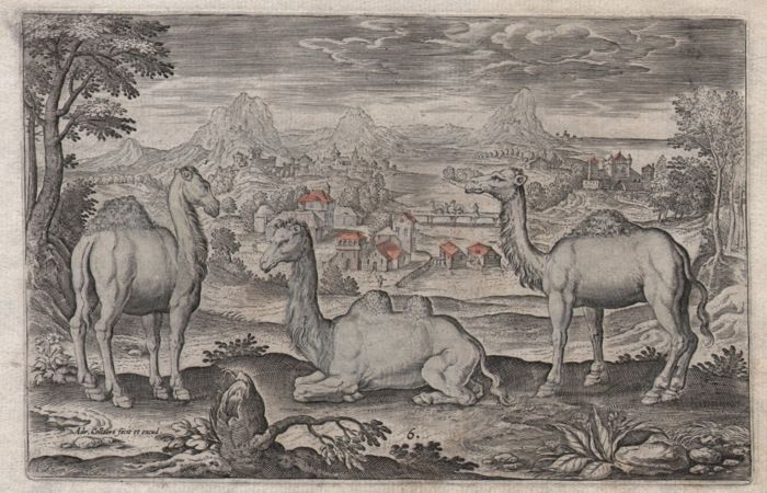 Adriaen Collaert (1560 - 1618) - Landscape with two dromedaries an a camel - first state - ca.1597