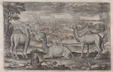 Adriaen Collaert (1560 - 1618) - Landscape with two dromedaries an a camel - in  first state - ca.1597
