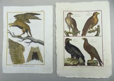 2 x Pierre Joseph Bonnaterre (1752-1804) - Birds of Prey, Eagle, Flacon, Golden Eagle - 1790