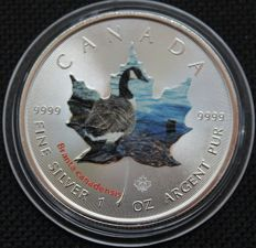 Canada - 5 dollars 2014 'Canada Goose' with colour application - 1 oz silver