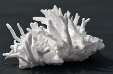 Aragonite Floss Ferry Approx. 5 x 3.8 x 2.6 cm - 23g