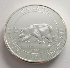 Canada - 8 dollars 2013 'Polar bear' – 1.5 oz silver