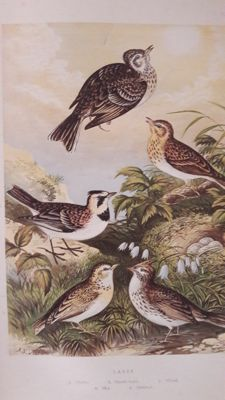 Adams - The Smaller British Birds - 1874