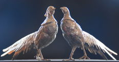 Large pair of silver-plated pheasants