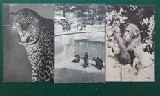 Selection of 73 postcards on the theme of animals