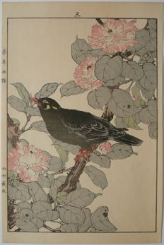 Beautiful wood carving of a common mynah on a blossoming camelia of Imao Keinen (1845 - 1924) - Japan - 1892