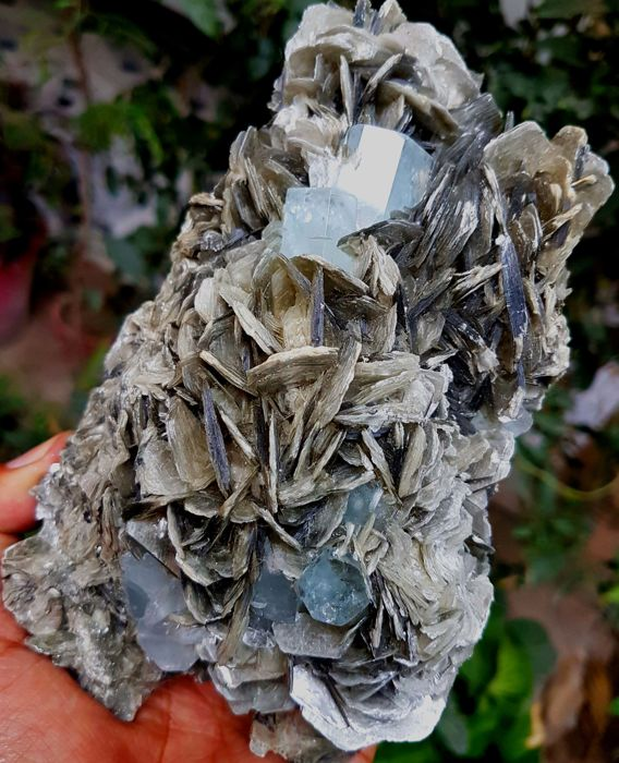 Blue Aquamarine Crystal cluster - Damage Free - on Muscovite Mica - 170 x 95 x 52 mm - 1009 gm