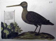 2 ornithological prints by Rémi Willemet - Woodcock Vanellus - 1794