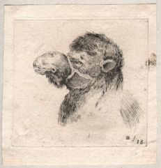 Stefano della Bella (1610-1664) - Study of a camel's head - Ca. 1647 /  ( added another ething from this series)