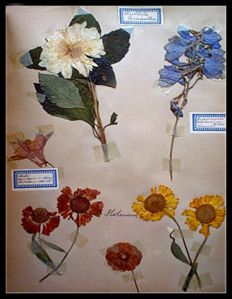 Herbarium; Lot with 7 items - 1860/1930