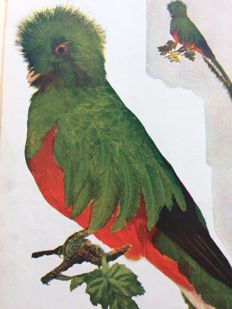 William Kerr Higley - Birds and Nature in natural colours - Parts 1-5 in 2 volumes - 1905/1907