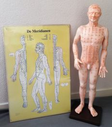 Male acupuncture anatomical model meridians + laminated acupuncture poster.