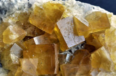 Cubic yellow Fluorite crystals on matrix - 13,2 x 8,5 x 6,3cm - 812gr