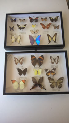 Pair of vintage Asian and South American Butterfly cases - 38 x 25cm  (2)